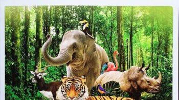 cong-vien-vinpearl-safari-phu-quoc pic feature-min